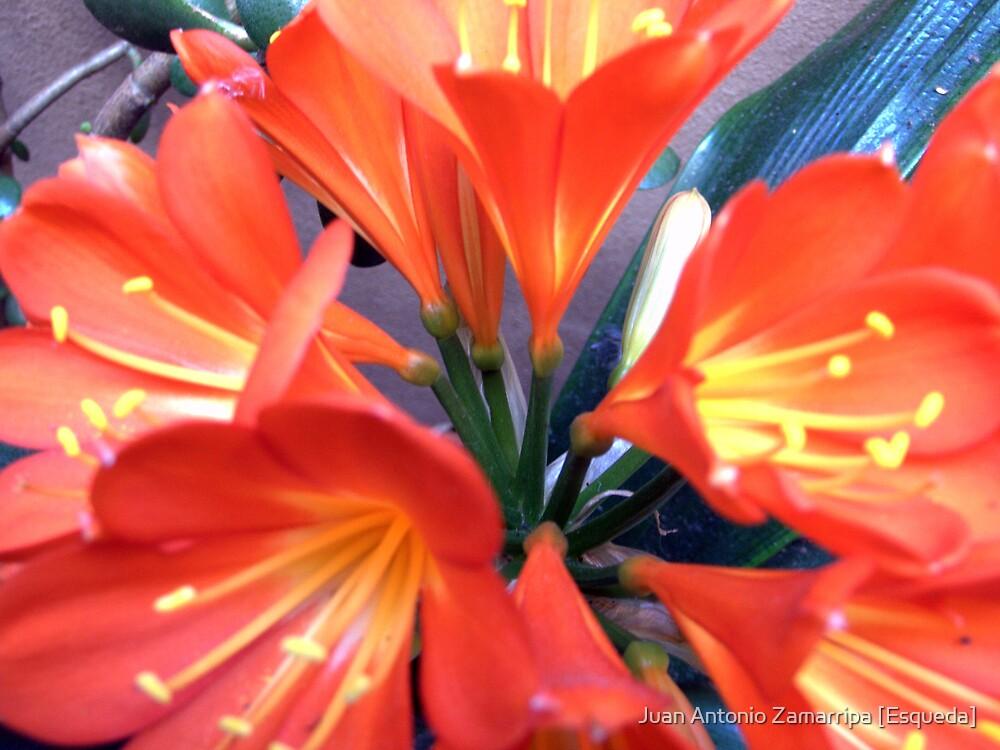 ...tender age in bloom... [P1200565 _XnView] by Juan Antonio Zamarripa [Esqueda]