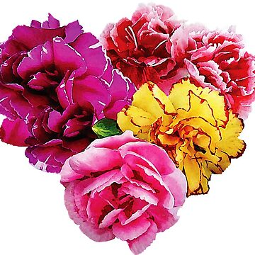 Carnation Heart Mixed Colors by SudaP0408