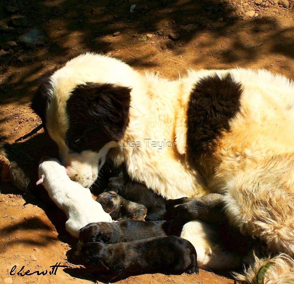 A Good Mommy by Lisa Taylor