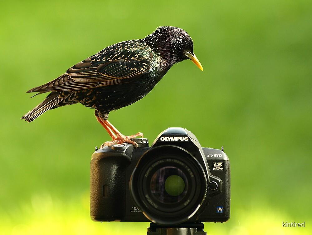 Big Bird, Little Camera by kintired