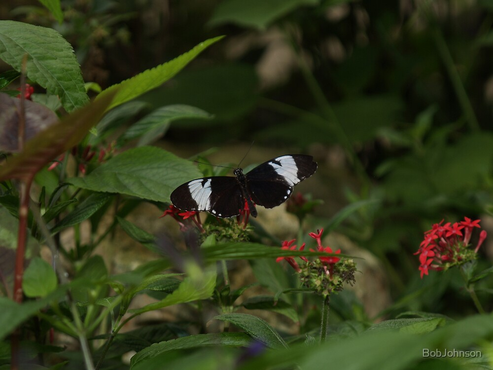 Black & White In Living Color, Blue & White Longwing by BobJohnson