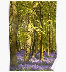 Dockey wood Poster