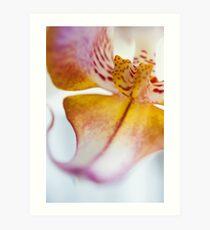 Orchid Petal Art Print