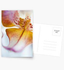 Orchid Petal Postcards