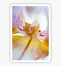 Spotted Orchid Sticker