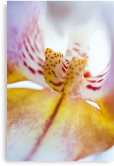 Spotted Orchid by mirandaburski
