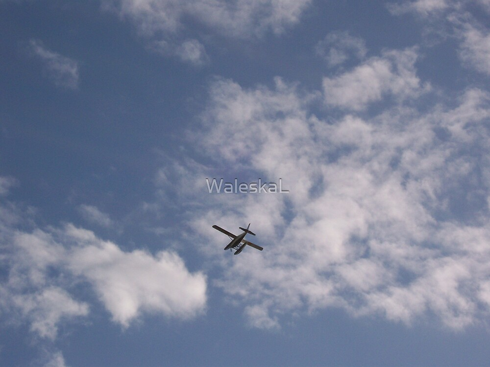 Its A bird, Its a Plane by WaleskaL