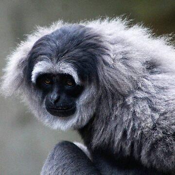 Silvery Gibbon by Ladymoose