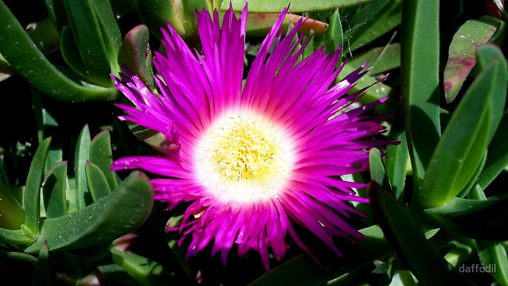 Gorgeous flower. by daffodil