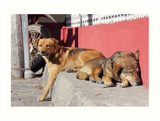 Two dogs relaxing on a city street, Guamote, Ecuador by Kendall Anderson