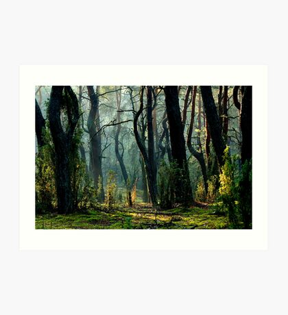 Kampinoski National Park in Poland Art Print