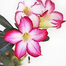 Desert Rose-8959 by Barbara Harris