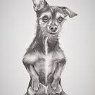 Dog or Meerkat? by Pam Humbargar