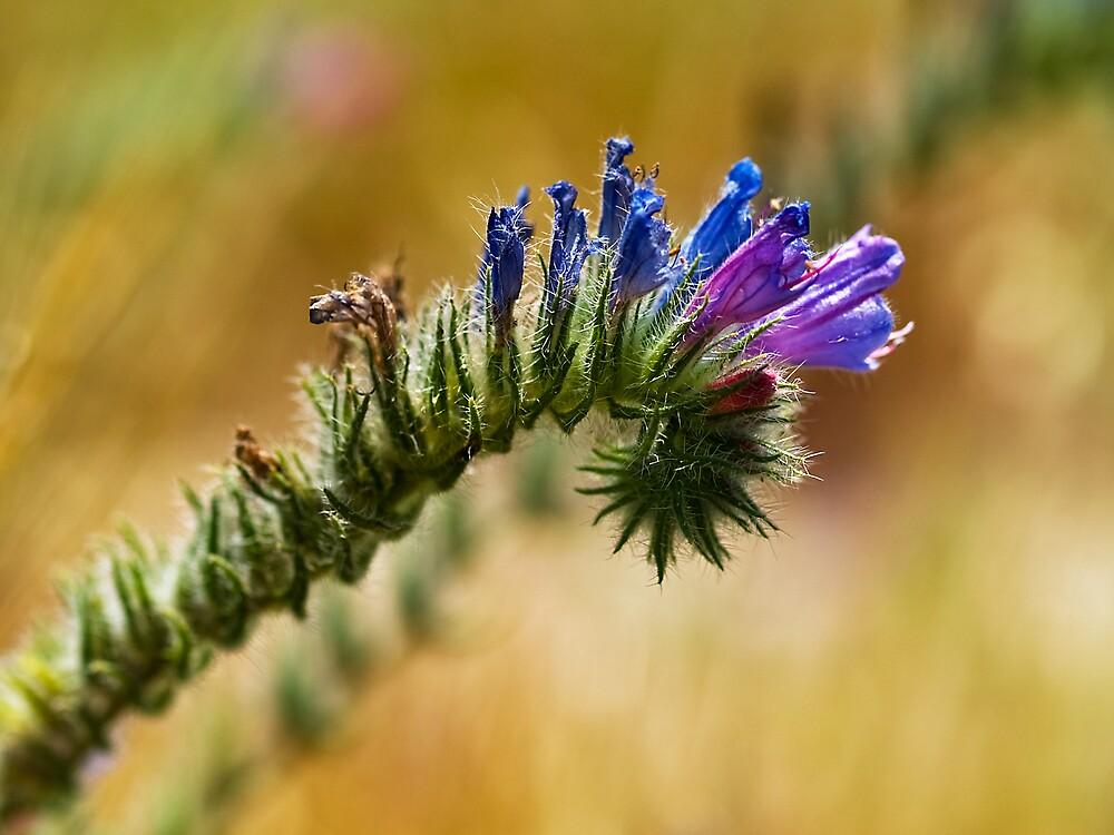 Caterpillar in Drag by David Platt-Chance