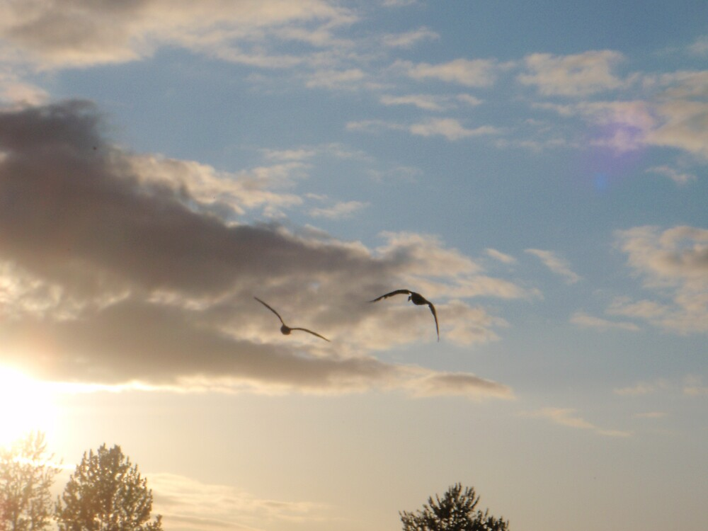Fly Away by heathernicole00