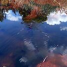 Red Water Snake Swimming In The Clouds by Jane Neill-Hancock