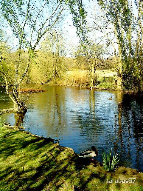 Eltham Park by tarabas57