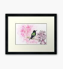 hummingbird and cherry blossoms - ink and watercolor - mixed media Framed Print