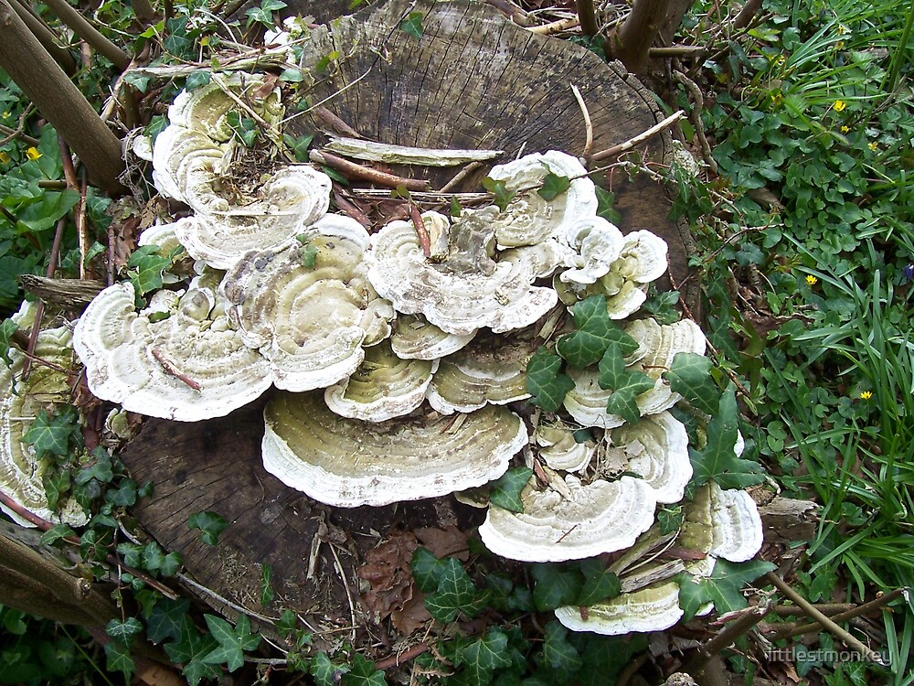 Fungi 2 by littlestmonkey