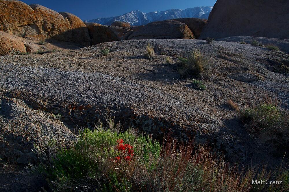 Flower in The Eastern Sierras by MattGranz
