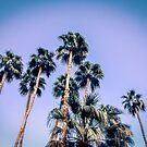 Palm Trees Palm Springs Summer by Amyn Nasser
