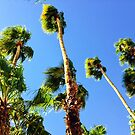 Palm Trees Looking Up by Amyn Nasser