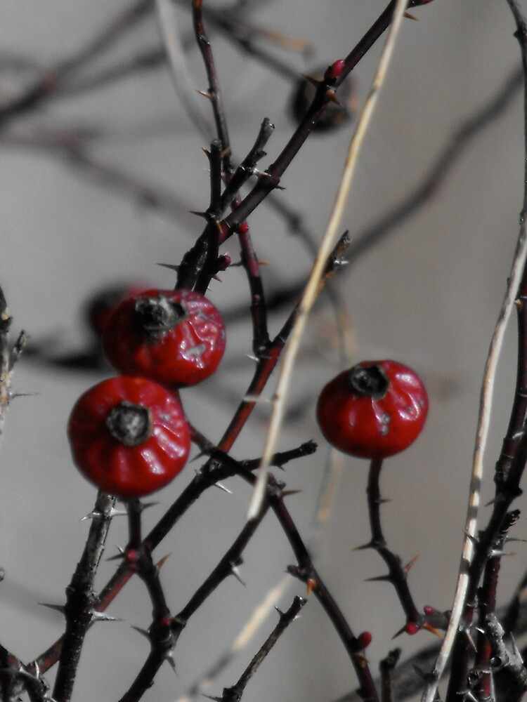 The berries of complication, New Hampshire by EMElman