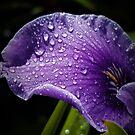 Purple Rain by DesJardins