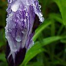 When I Grow Old I Will Wear Purple by DesJardins
