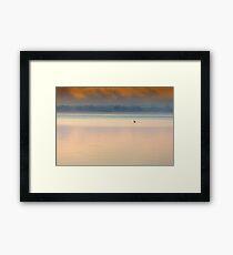 Gippsland Lakes 'Lone Swan' Framed Print
