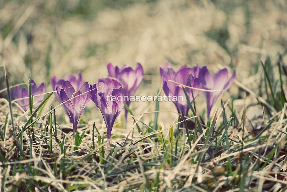 purple spring by feonaseerattan