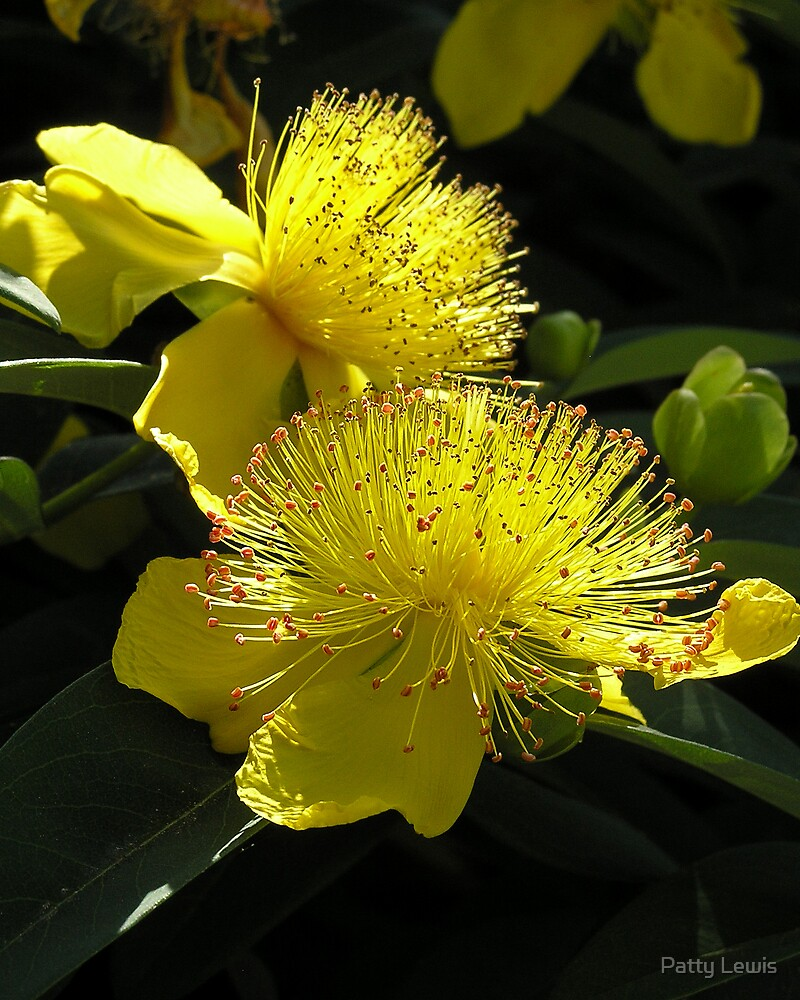 Mellow Yellow ~ Quite Rightly... by Patty Lewis