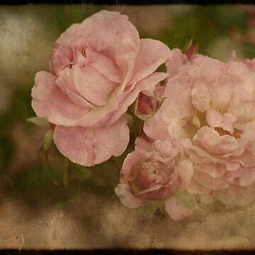 Summer Beauties by GVAZDesigns