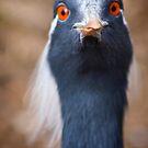 Professor Birdie... by Chris B.