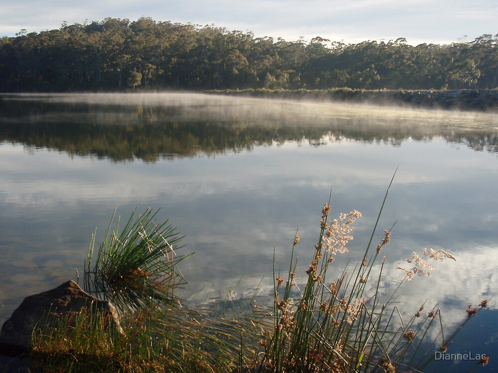 Morning mist on Brushy Lagoon by DianneLac