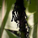 Banana Leaves by Sally Sloley
