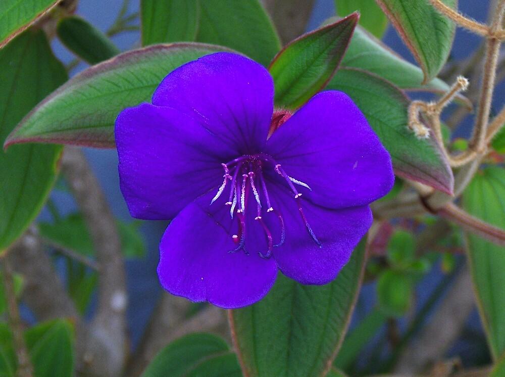 Purple pleasure by markodorko