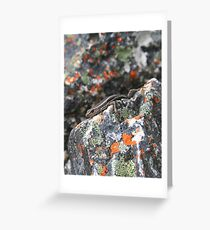 Rock skink Greeting Card