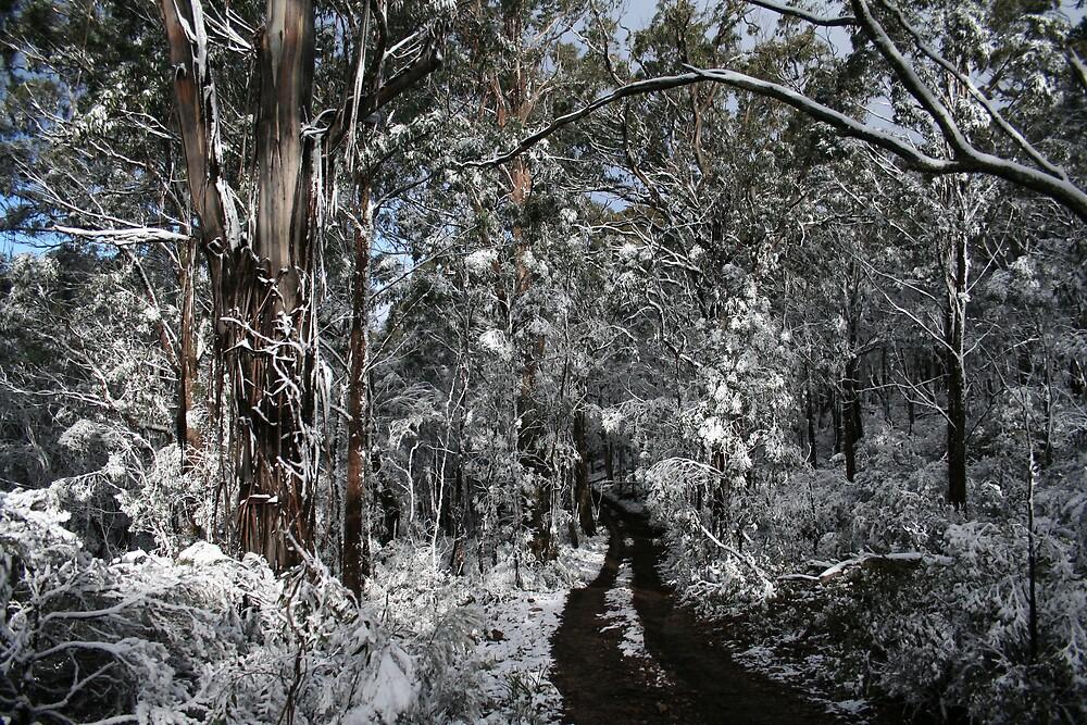 Snowy Trail by Norman Mueller