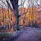Wood in the sunset by Thaichi