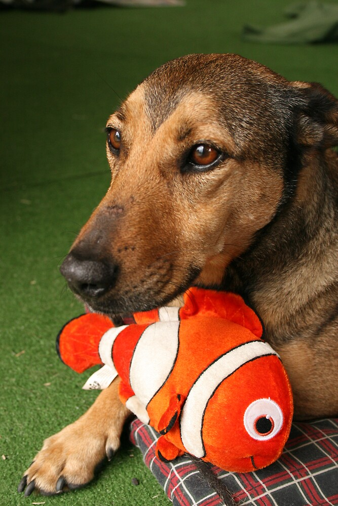 Nemo and Fritz by Bernadette Madden