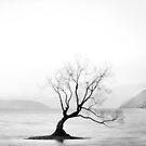That Wanaka Tree by Candy Jubb