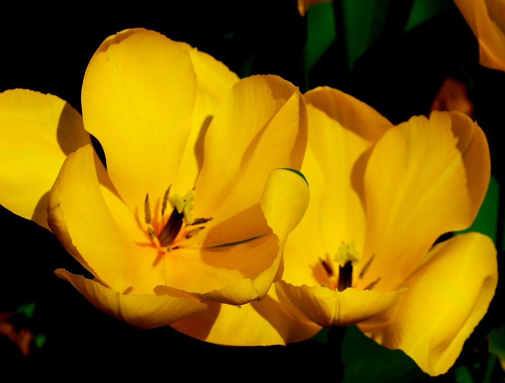 Mellow Yellow by Carol Clifford
