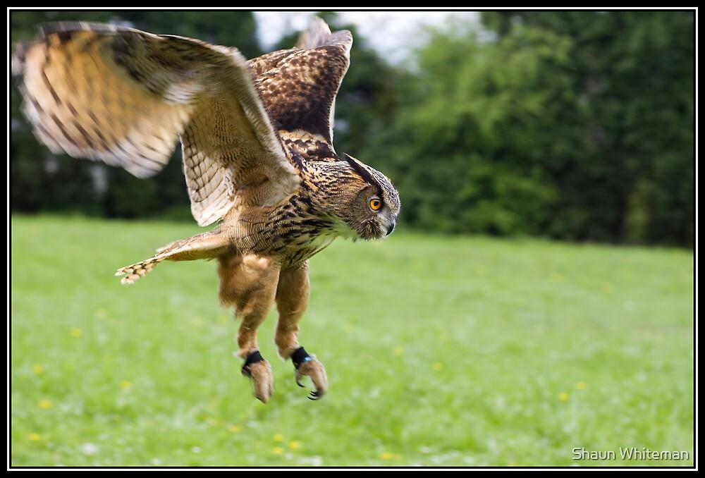 Checkers in flight by Shaun Whiteman