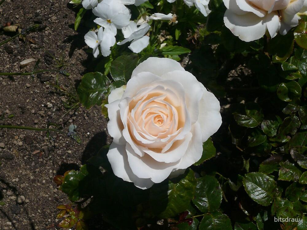 Pink Rose by bitsdraw