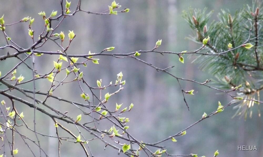 Budding Spring by HELUA