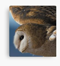 owl  flying ! beautiful product for owls  lovers Canvas Print