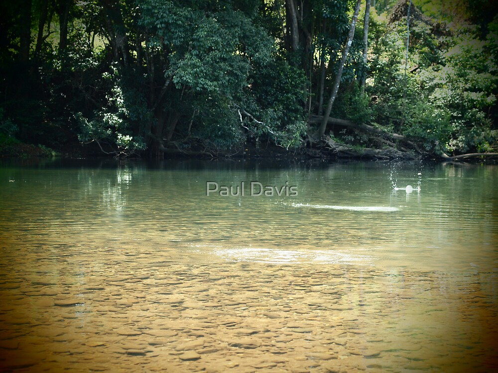 Skip - The Mulgrave River at Ross & Locke - Queensland - Australia by Paul Davis