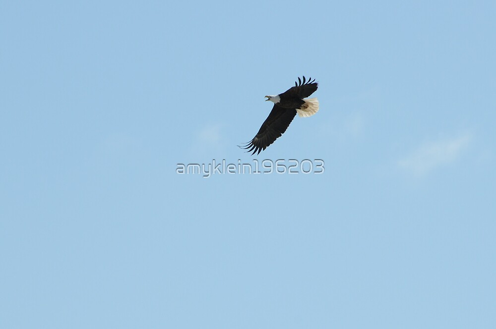 Flying Eagle by amyklein196203