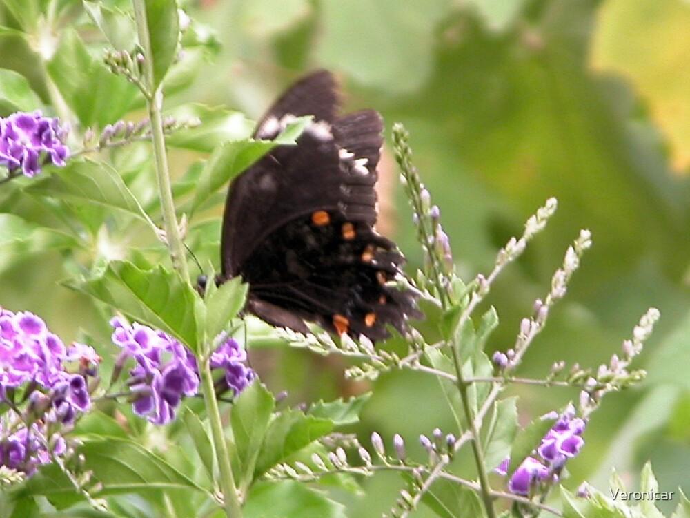 'Black Butterfly Orange Spots' by Veronicar